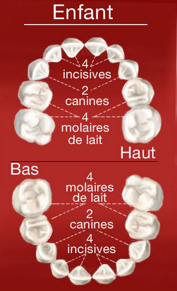 Dentition Enfant